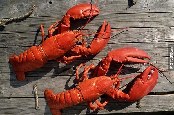 16個會讓你感到難以置信的知識。龍蝦居然是長生不老?!