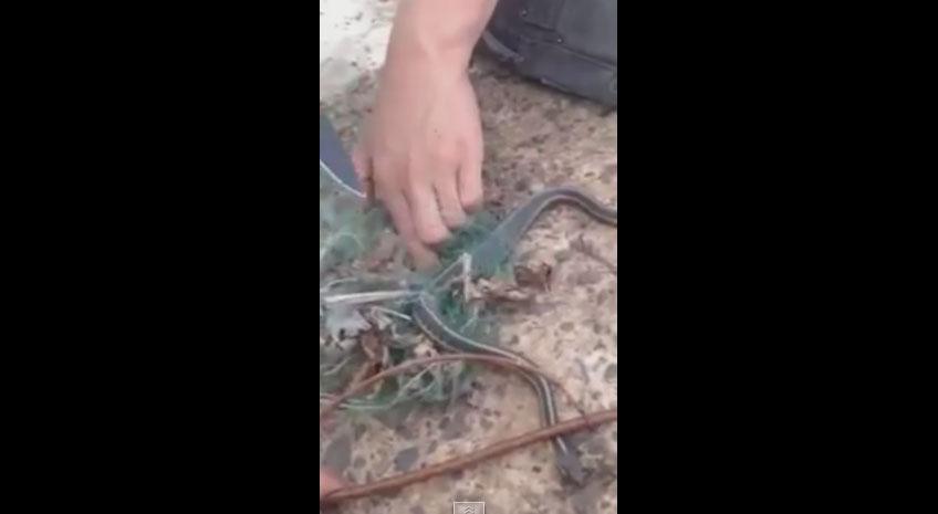 隨手拯救被網子纏繞的蛇 牠直接「把午餐吐出來」當謝禮:這很好吃,你留著啊