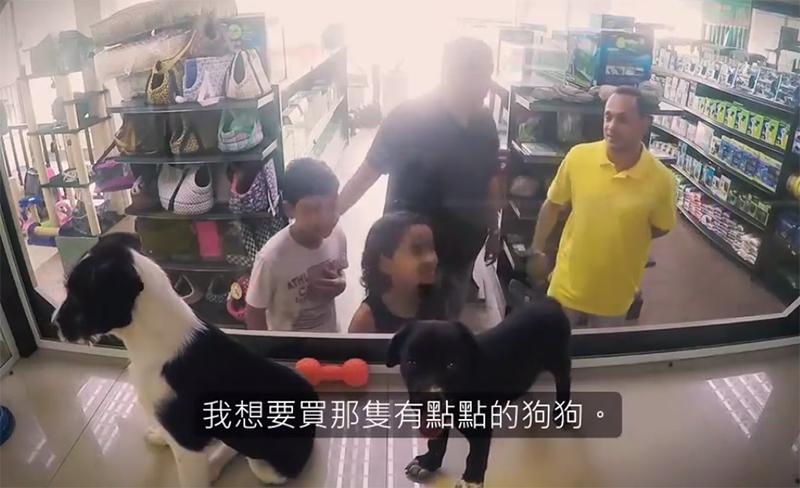 救援團體偷偷將收容所貓狗「放進寵物店櫥窗」 消費者的開心反應完全出乎意料!