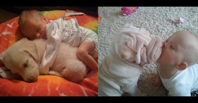 11張超盡責的「狗狗褓母」 看完證明懷孕就棄養的人真的太笨!