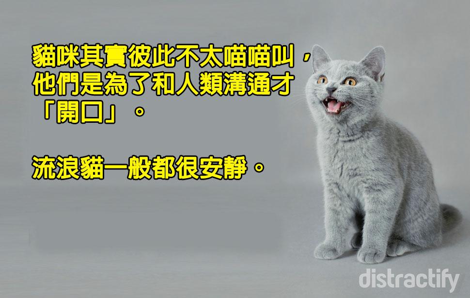 其實比狗狗懂溝通!11個「貓咪行為大解析」 在你腳邊磨蹭=人類的討抱抱♥