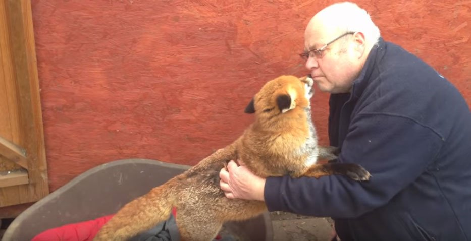 他7年前拯救了這隻小狐狸 當小狐狸再次看到她的救命恩人時...整個就爆炸了!