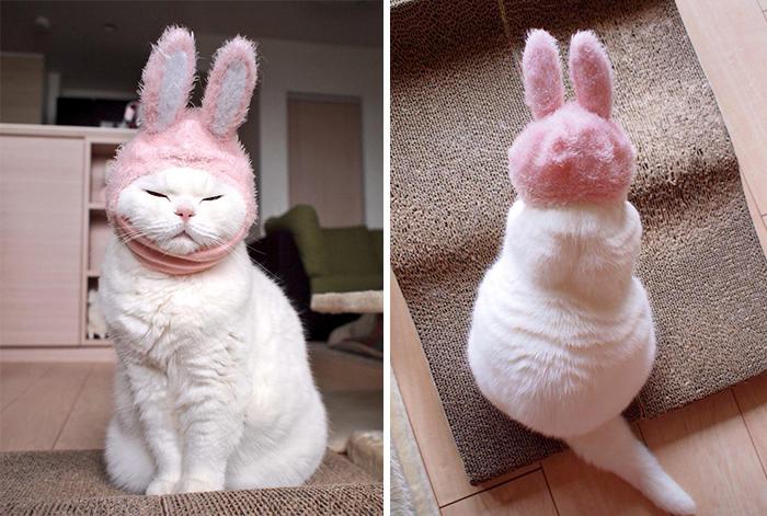 這隻「高齡20歲的貓奶奶」是日本最懶的網路明星 光是躺著都能讓你徹底融化!