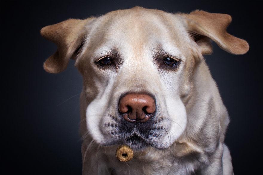 丟餅乾給10隻「肚子超餓的狗狗」 拍到的「超完美瞬間」證明牠們完全能做表情包!