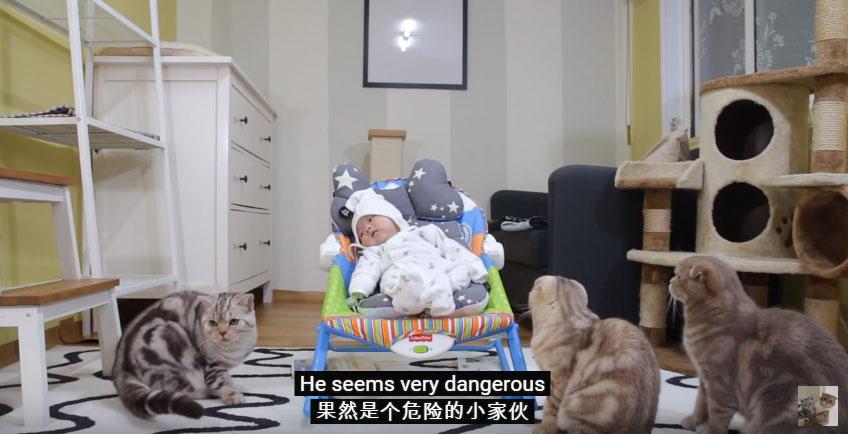 家中貓咪主子發現來了一個人類新成員,當下馬上開始面試他的模樣可愛爆了!