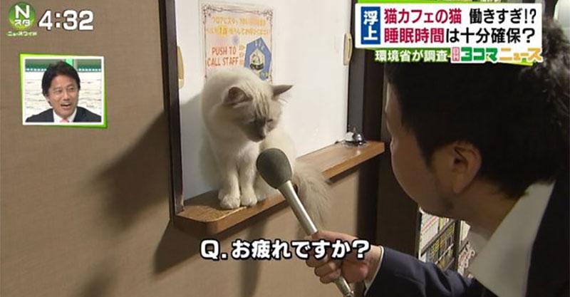 一直加班的貓被問到說「上班時間這麼長你累嗎?」 回答讓網友:心疼!