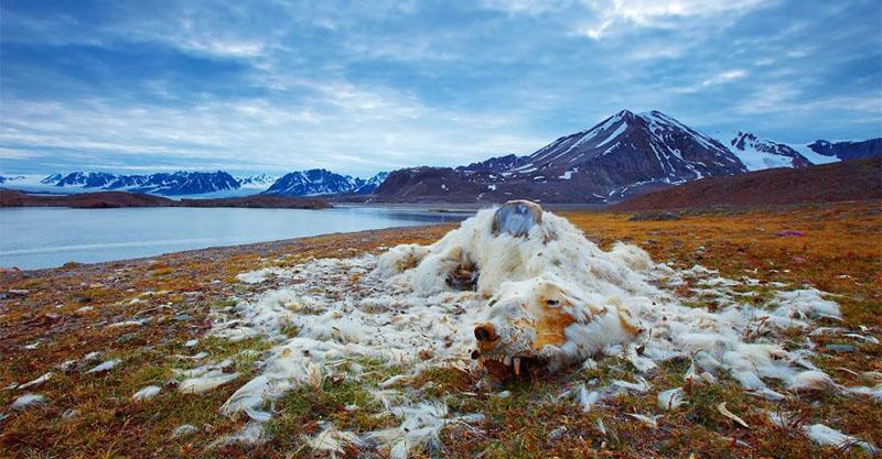 38張「讓你看著看著呼吸就停止」的國家地理自然攝影決賽作品 也看到人類的自私...
