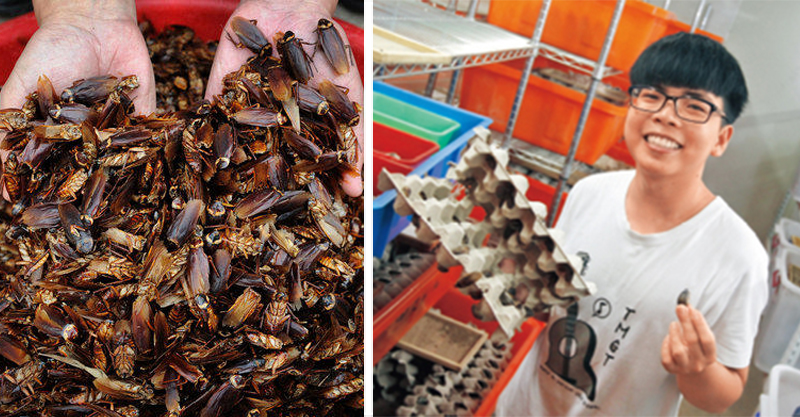 20歲男大生養蟑螂月入200K 廠裡有270萬隻蟑螂自爆「每天做惡夢」!