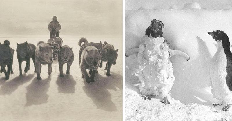 100年前澳洲首支「南極敢死隊」圖集 逼近天堂和地獄之間才能見證的美