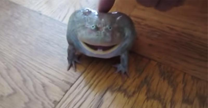 家裡闖入陌生青蛙 突發奇想戳一下「爆發耍脾氣尖叫聲」