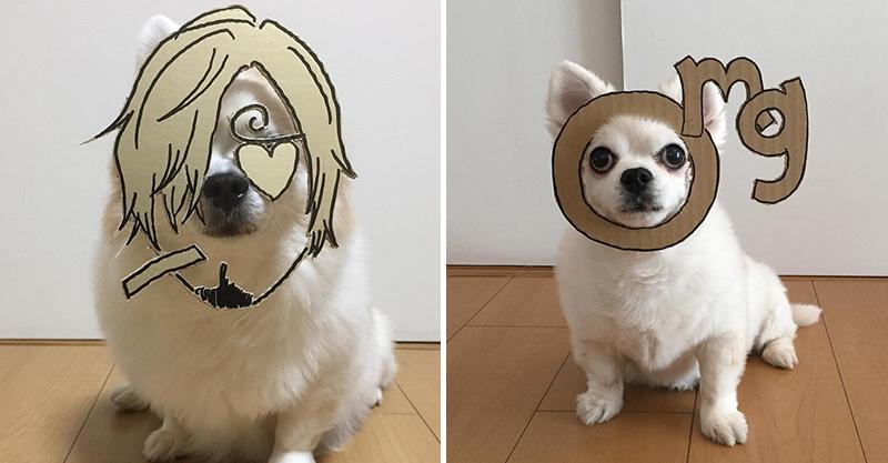 百變吉娃娃!有才主人製作「紙板變裝面具」 鼻子一套上:你哪位?