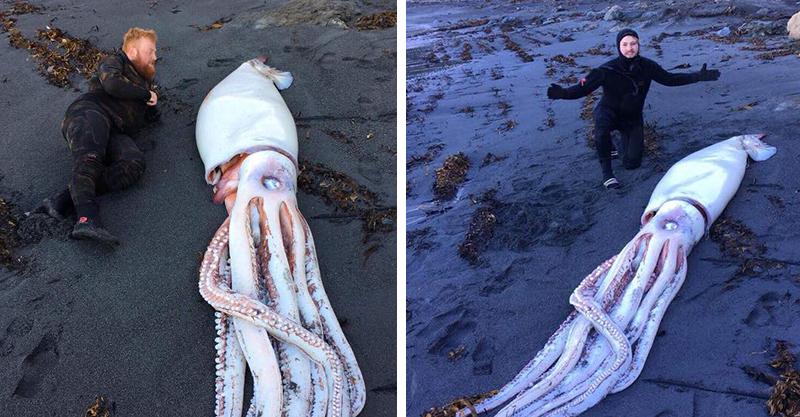 比鯊魚還兇!4.2公尺「大王烏賊」沙灘擱淺 潛水者抖抖:遇到他只能快逃