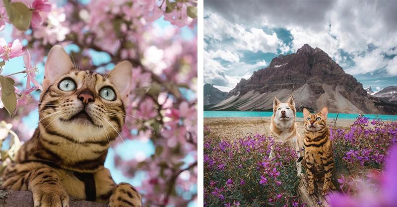 空靈系帥貓!愛上跟主人一起去旅行 豹貓配上大自然豪美:朕是名模捏~