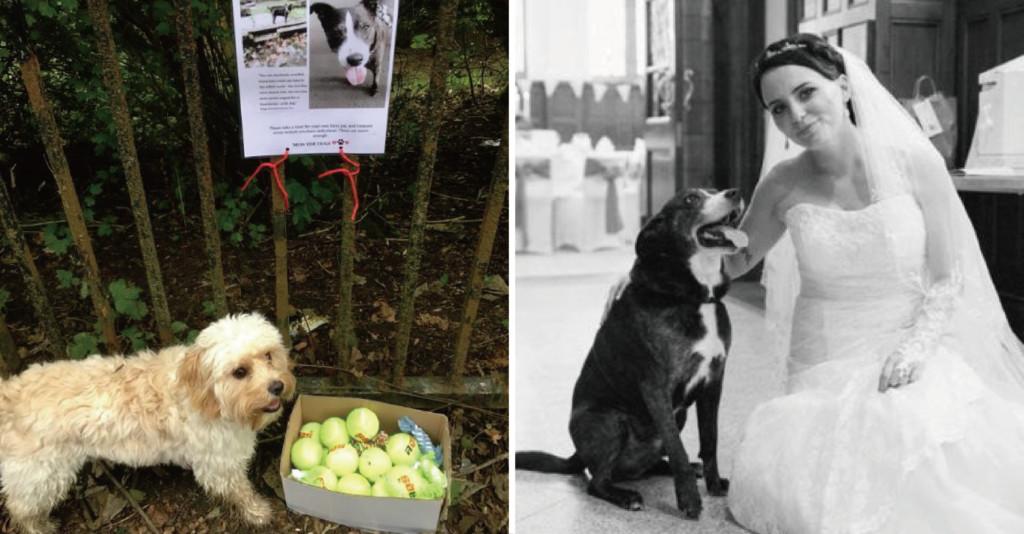 心碎主人在愛犬生前最愛人行道 「擺滿球球」勸人:多陪陪牠們吧