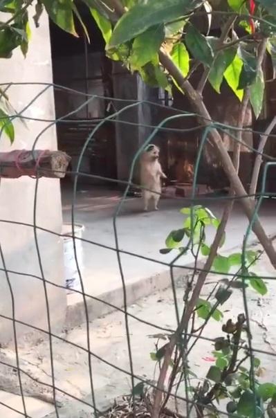 搖咧搖咧!狗狗趁主人不在 庭院站立搖擺展現銷魂舞姿:有夠不正經~