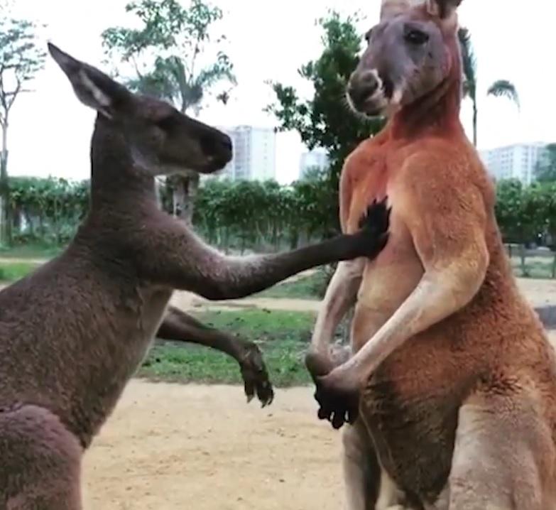 袋鼠老公氣pupu 老婆「親手手摸胸口」討好:不要生氣了啦!