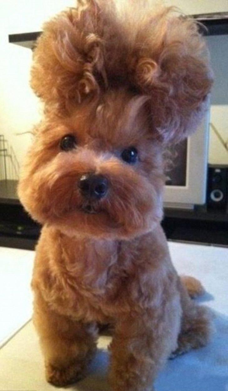 主人你是在耍我嗎?17張狗生被嚴重玩壞了「髮型超崩壞照」