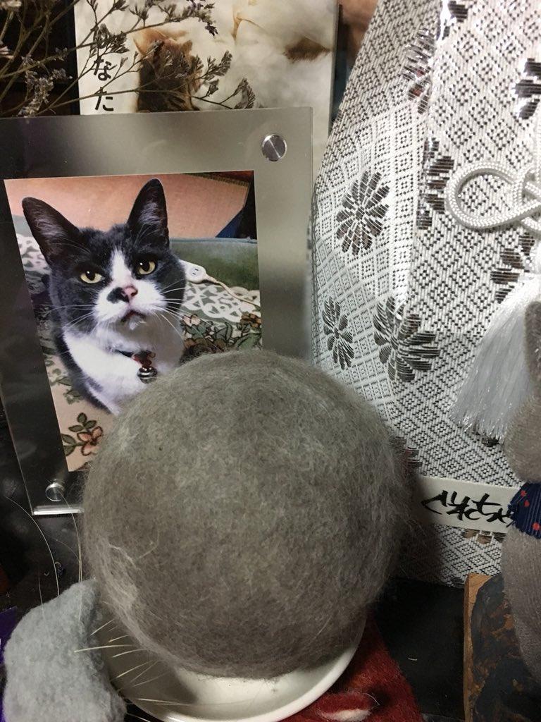 奴才秀「幫主子收集7年」巨大貓毛球 釣出貓奴同好曬照:是愛的結晶♡
