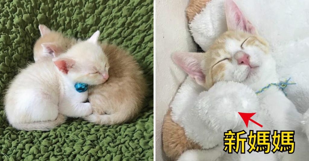 孤兒奶貓想家了...「新媽媽」出現每天抱著睡覺:滿滿的安全感♡