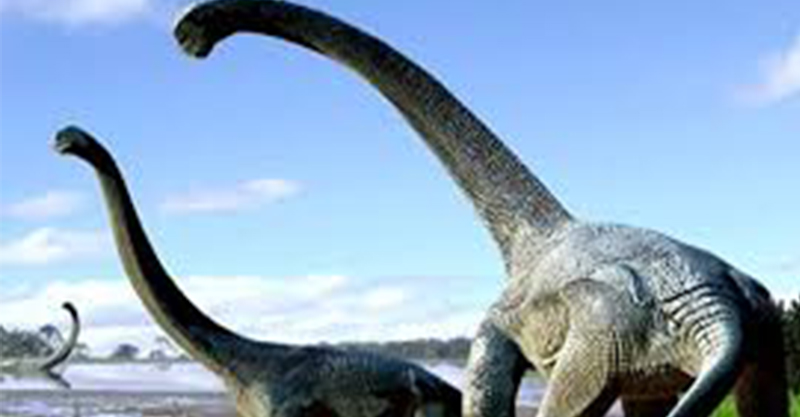 《侏儸紀公園》是真的!鄉民拍到「大批腕龍」過河 破解真相...本尊太萌!
