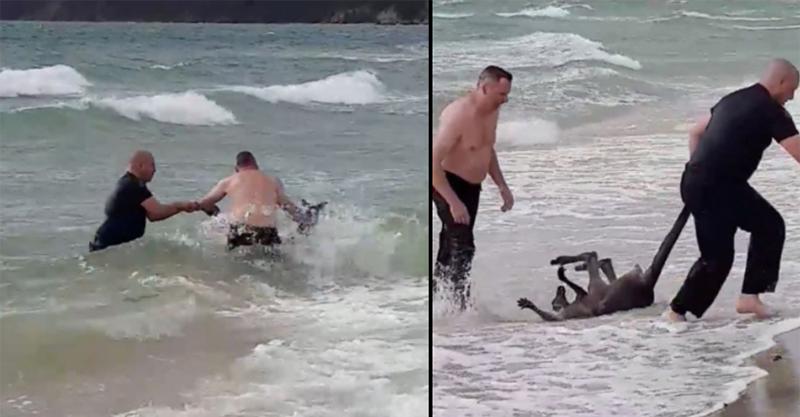袋鼠玩水「直接被海波浪捲走」 警察伸出援手牠卻直奔回海裡...這肯定對人類很失望啊!