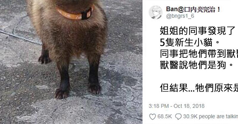 街上撿到剛出生小貓!獸醫說「是狗狗才對」 結果長大後...原來貓狗都不是啊