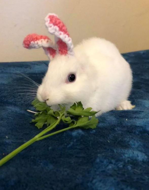 缺耳兔膽小躲角落 媽咪「親手織耳朵」幫牠戴上:你才是最特別的~