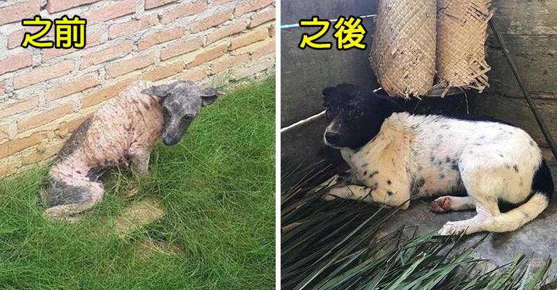 狗狗外型突變成「地獄之犬」 愛心組織「2個月完美變身」終於看出真實長相!