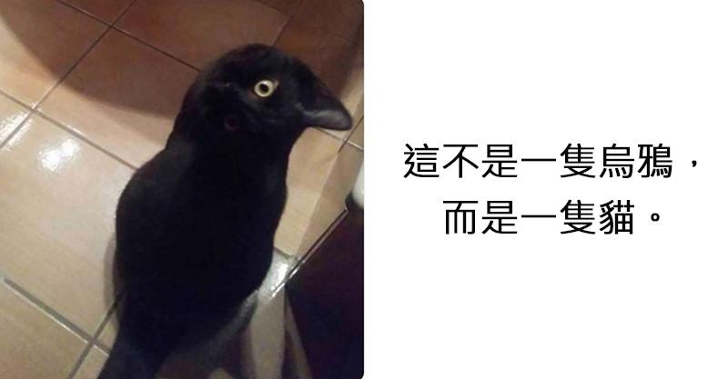 像到Google都頭暈!繼白金藍黑裙後又出現史詩級難題 「到底是黑貓還是烏鴉?」