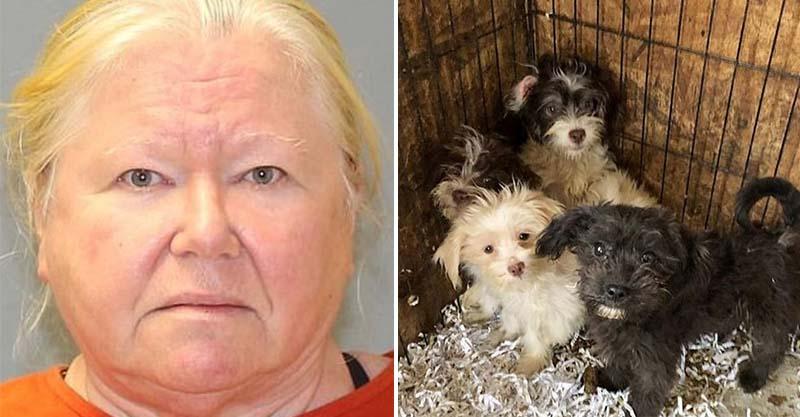 她家挖出「陳年44隻香肉」冰冷凍 後院161隻小狗仔QQ:拜託帶我們走!