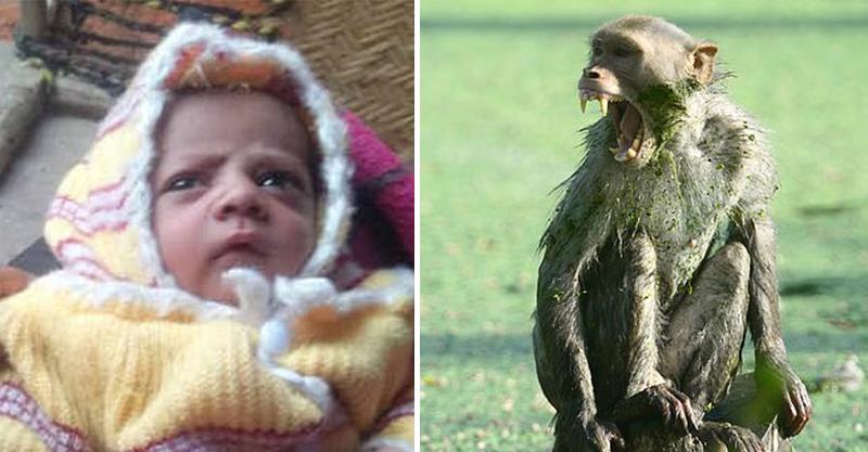 出生12天小女嬰「直接被猴子抓走」 親媽一路追尋卻在屋頂上找到一攤鮮紅...