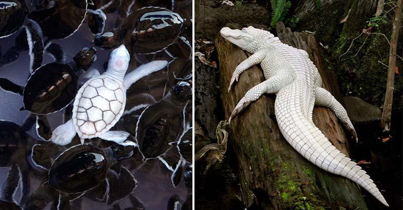 23個「上帝忘記給予顏色」的白化症動物 全白孔雀完全是神話裡的仙獸!