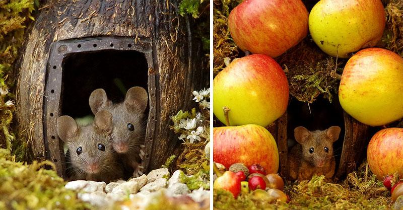 男子某天發現「超可愛小老鼠家庭」住在花園 決定為牠們建造出像童話故事的小村莊!