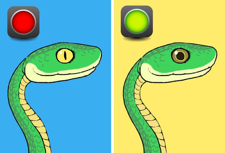 怎麼分辨蛇有沒有毒?6種「在關鍵時救你一命」的判斷方法 游泳方式大不同!