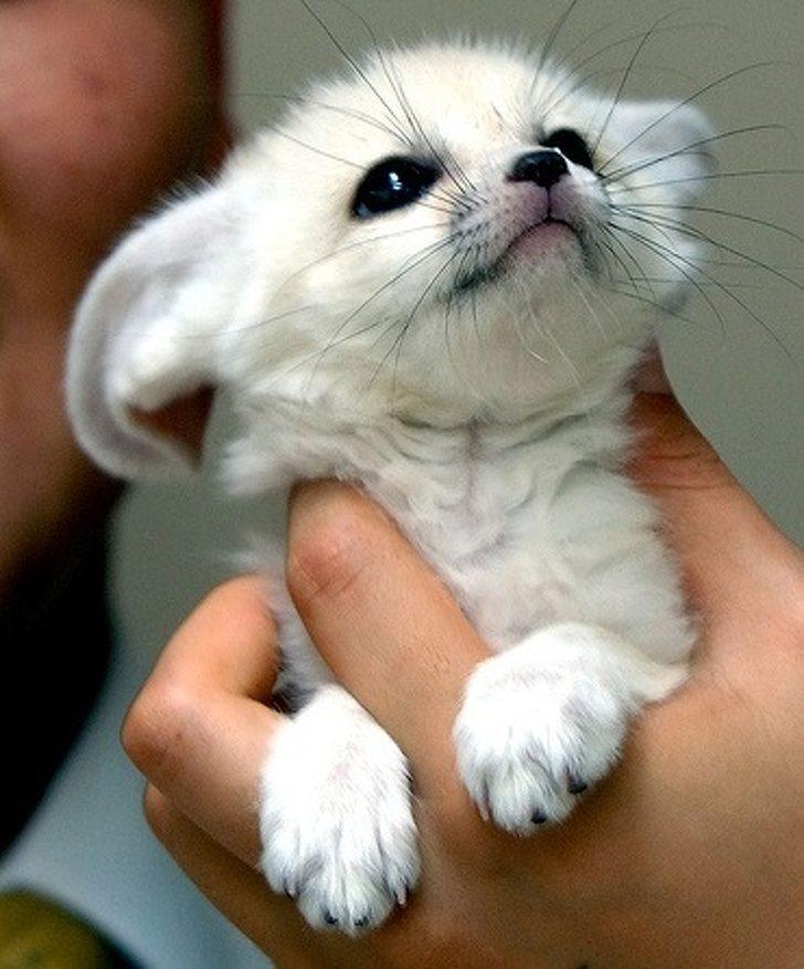 24張讓你直呼「這一定是天使」的動物寶寶照 海豹寶寶療癒力絕對是MAX級~