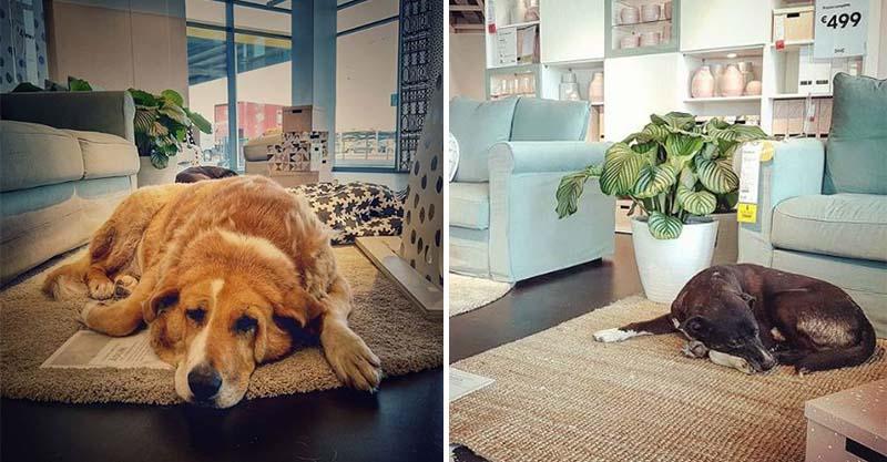 冬天來了卻很暖!IKEA開放「超溫馨臥室展場」 浪浪衝進去躺平:終於有家~