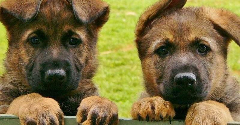 天下太平警察要幹嘛?紐西蘭警察官方IG「狗狗生活照氾濫」可愛到不行 網笑:狗比警察多?