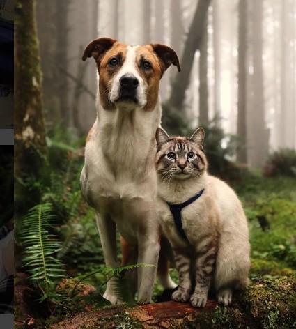 趴上去就知道對了!貓皇在「傻汪頭頂找到安全感」 疊疊樂好夥伴背後卻有坎坷身世QQ