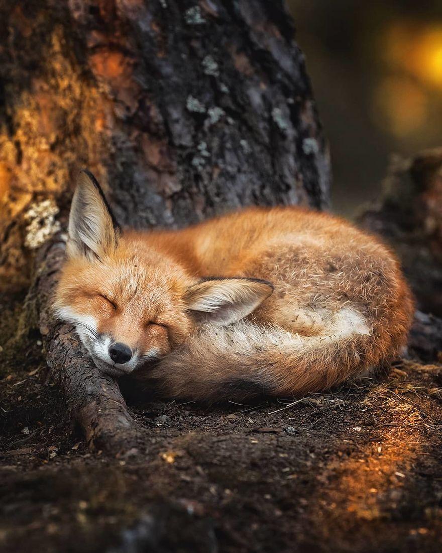 15張「帶你進入童話故事」的夢幻森林 肥嘟嘟松鼠站著睡覺太可愛!
