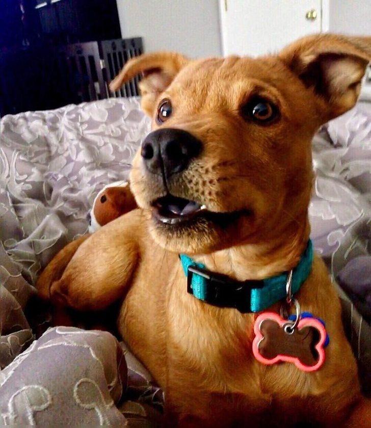 21種「擁有完美基因調配」的混血動物 黑色黃金獵犬+哈士奇的玻璃珠藍眼睛❤