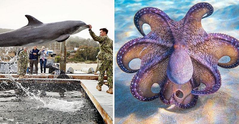 20張大自然生物絕對是奇蹟的創造者 「紫色烏蘇拉章魚」裙擺一張開直接迷幻敵人!