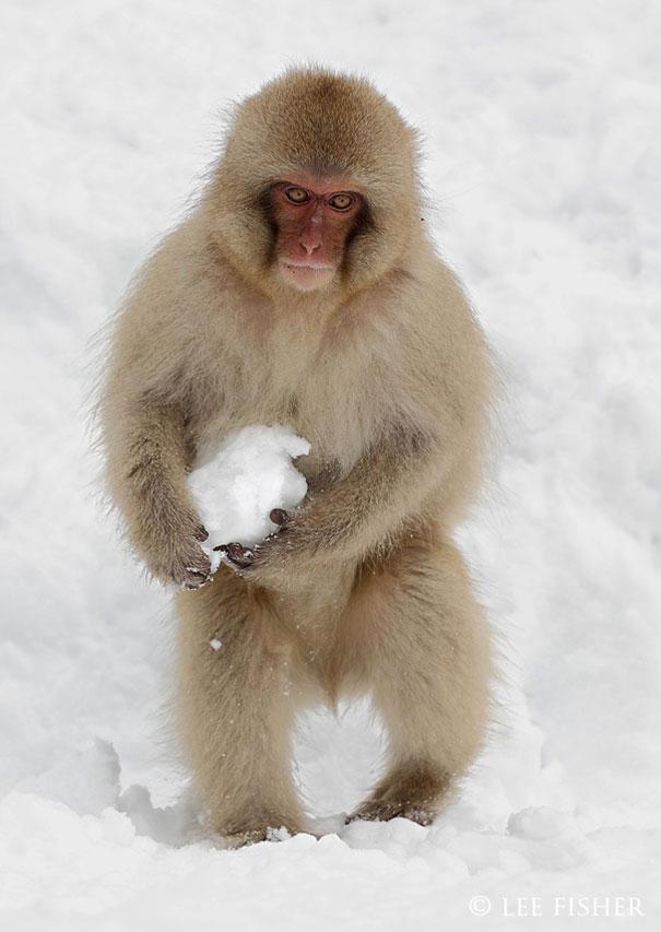 20個懷疑牠們「擁有特異專長」的萌萌動物 日本獼猴根本已經超進化!