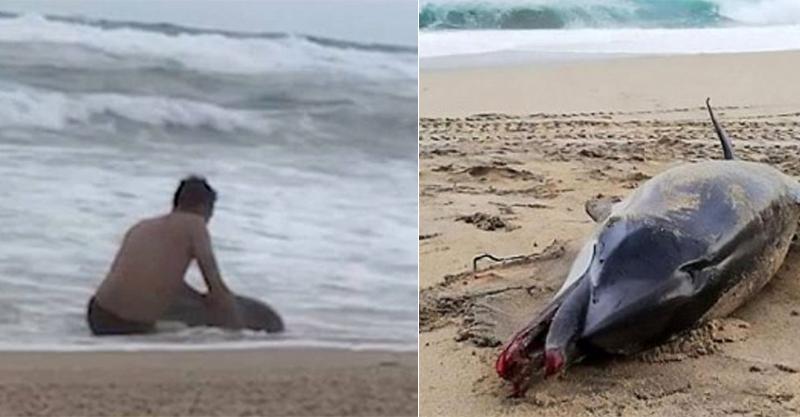 海豚擱淺沙灘...他奮力抓尾巴想「拖回大海」 最後卻敵不過陸地上死.神的呼喚!