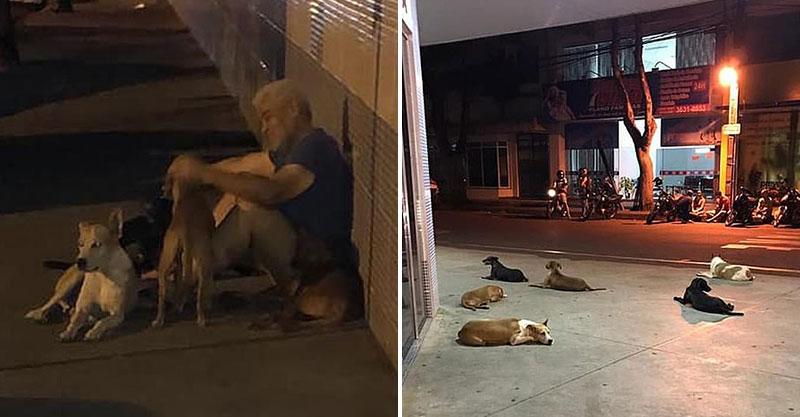 6隻狗狗狂追「載街友的救護車」 醫院外連等24小時...焦慮到不吃不睡!