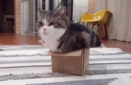 4天沒看到主子...快遞公司打來「你的貓被寄到1200km」 她瞬間驚醒:對哦難怪包裹會動!