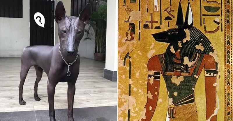 「是狗還雕塑」網友超暈 3500年歷史狗狗撞臉埃及神「全身皮膚反光」!
