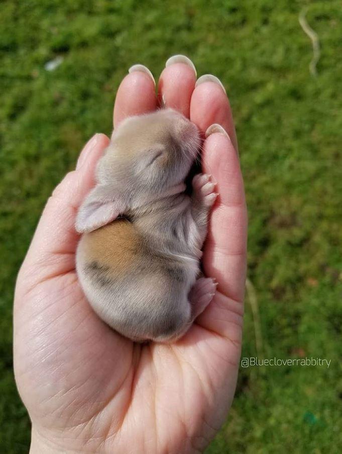 23張像是「注入你心裡的維他命」一樣的動物療癒照 小豬寶寶就是剛睡醒的女友 ❤