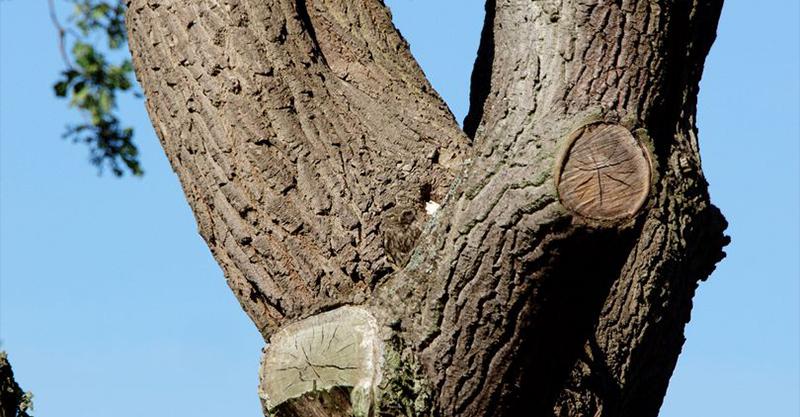 攝影師捕捉到超Q萌貓頭鷹 牠卻「神融合在樹幹上」網大崩潰:都變鬥雞眼還找不到!