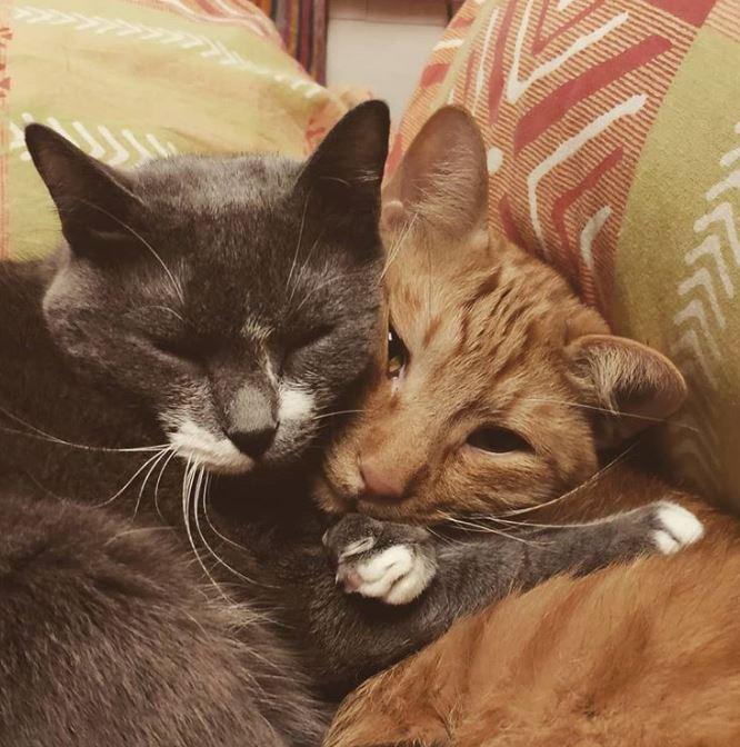20隻「忘記演戲被人類抓包」的貓咪外星人 牠練成一身肌肉:看什麼看!