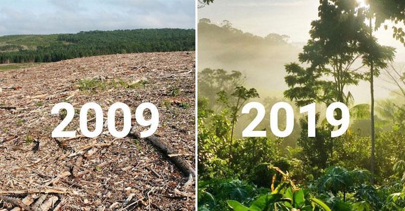 20張讓你想哭的「地球還有希望」世界綠化照 為了一棵小樹馬路變成U字型